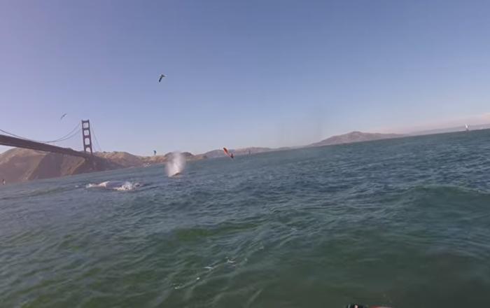 Windsurfers Encounter Humpback Whales in San Fran