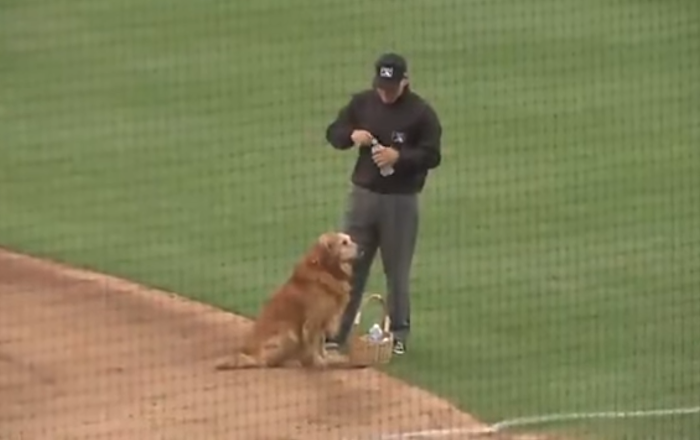 Jake the Diamond Dog Helps Out Parched Ump