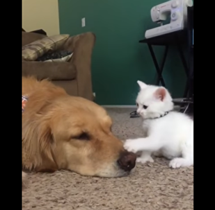 Kitty Wants Playtime, Dog Says Nope