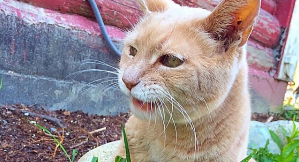 Alaska Town Says Goodbye to Honorary Cat Mayor