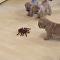 Eight Shar Pei Pups Take On Robotic Spider