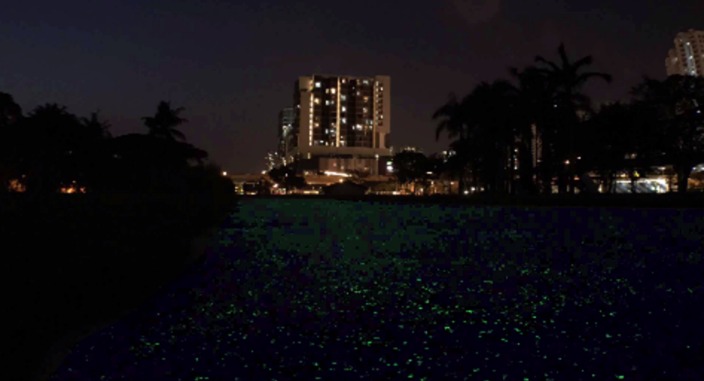 GlowintheDark Paths Singapore Tests Out New Technology For - Singapore is testing out glow in the dark pathways and they look amazing