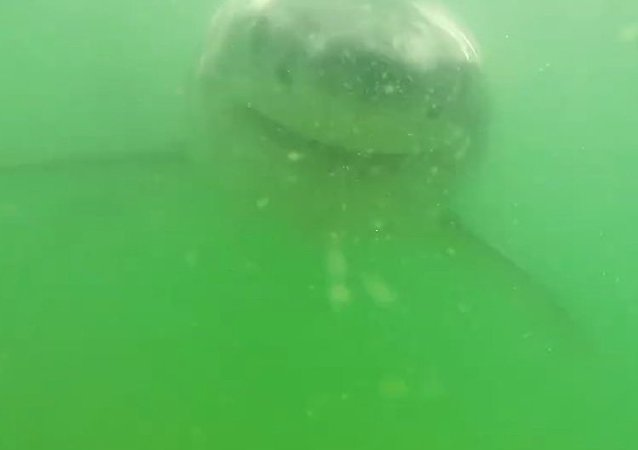 Video of a shark attacking a camera will make you never want to go into the ocean