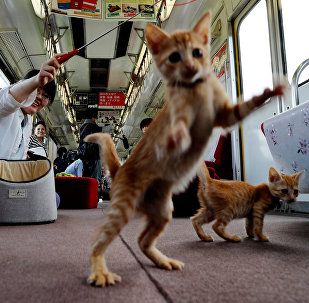 Cats on Tracks: A Ride Aboard the Japanese Feline Train Cafe
