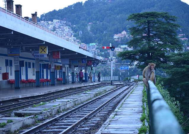 Monkey at the Shimla railway station. (File)