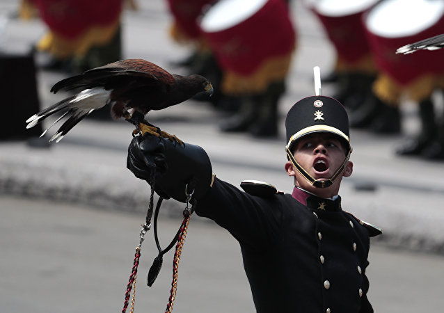 An eagle perches on a leather glove, as the handler looks up toward the president while filing past during the annual Independence Day military parade in Mexico City's main square, known as the Zocalo, Saturday, Sept. 16, 2017. Mexico is marking the 207th anniversary of its independence from Spain