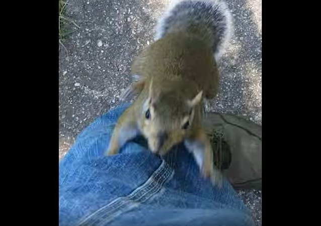 Squirrel Attacks Man