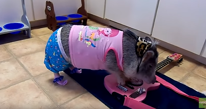 Pajama Pig Goes Punk on Guitar