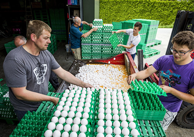 Farmers throw eggs at a poultry farm in Onstwedde, Netherlands, on August 3, 2017 after the Dutch Food and Welfare Authority (NVWA) highlighted the contamination of eggs by fipronil, a toxic insecticide outlawed from use in the production of food