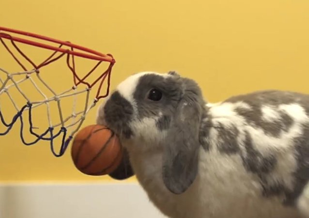 Bini the slam dunking basketball bunny