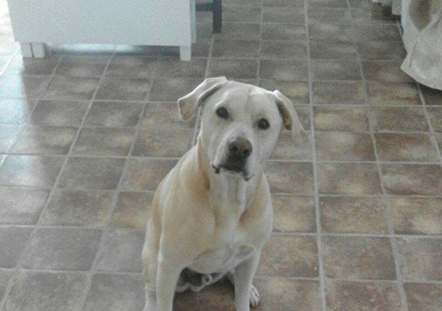 Blat, el perro que huele el cáncer de pulmón