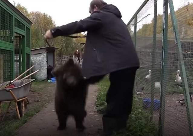 Female Bear Dasha Was Rescued From a Wandering Circus