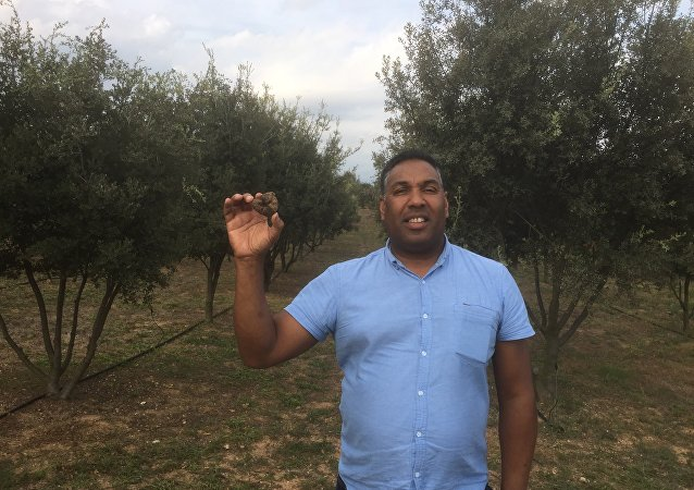 Martin Waddell, MD and founder of Truffle Farms Europe