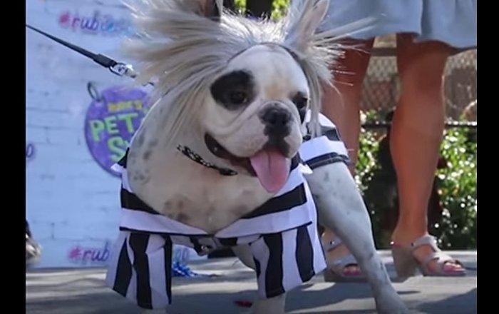 Canine Halloween