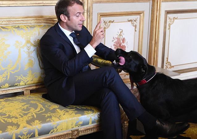French president Emmanuel Macron gestures towards his dog Nemo (File)