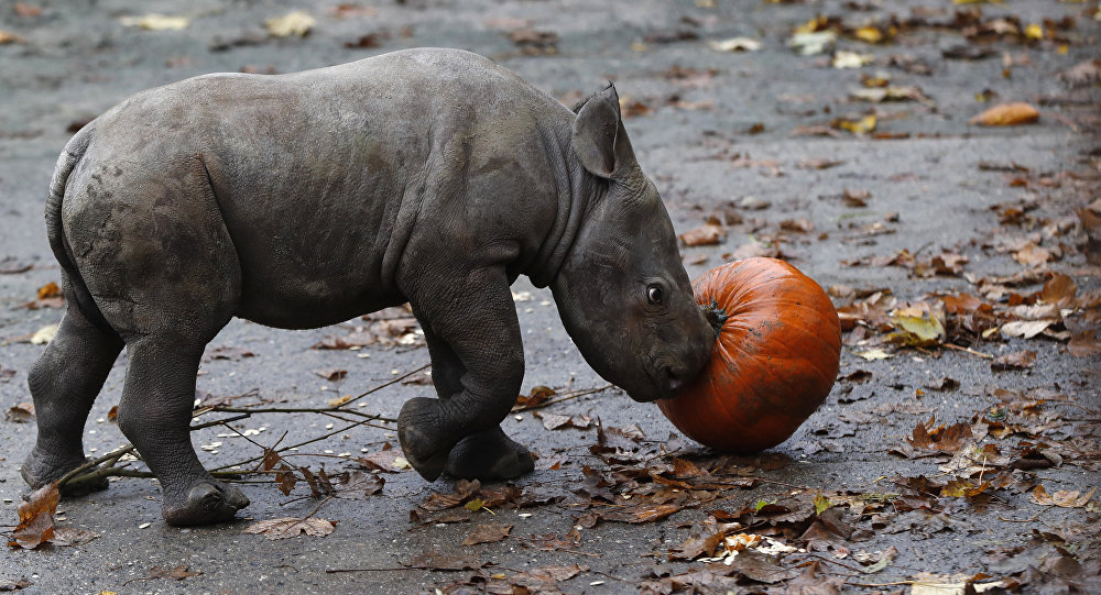Image result for baby rhino