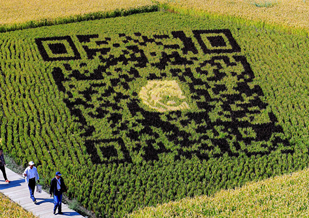 A QR code design created using different varieties of rice is seen in a paddy during the harvest season in Shenyang in China's northeast Liaoning province on September 20, 2017