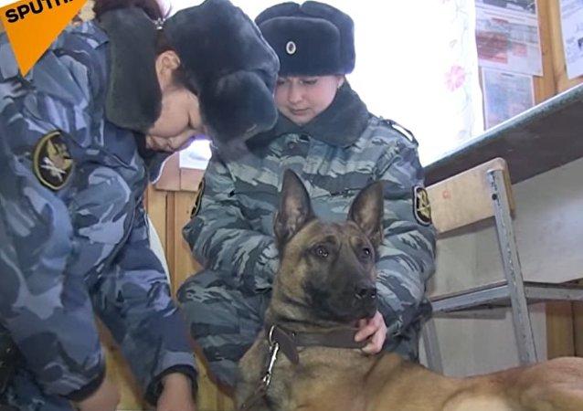 Cloned Guard Dogs of Yakutia