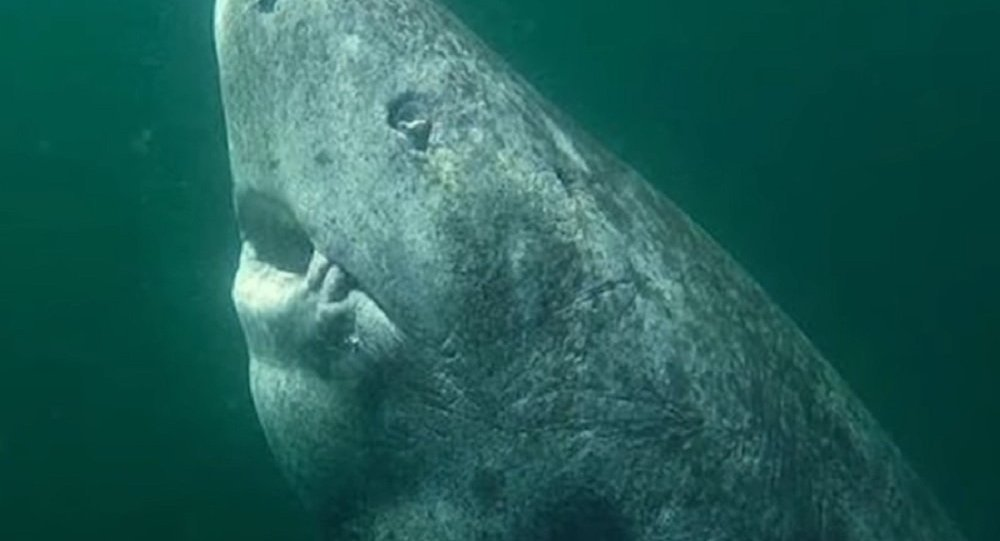 The Oldest Shark On Earth