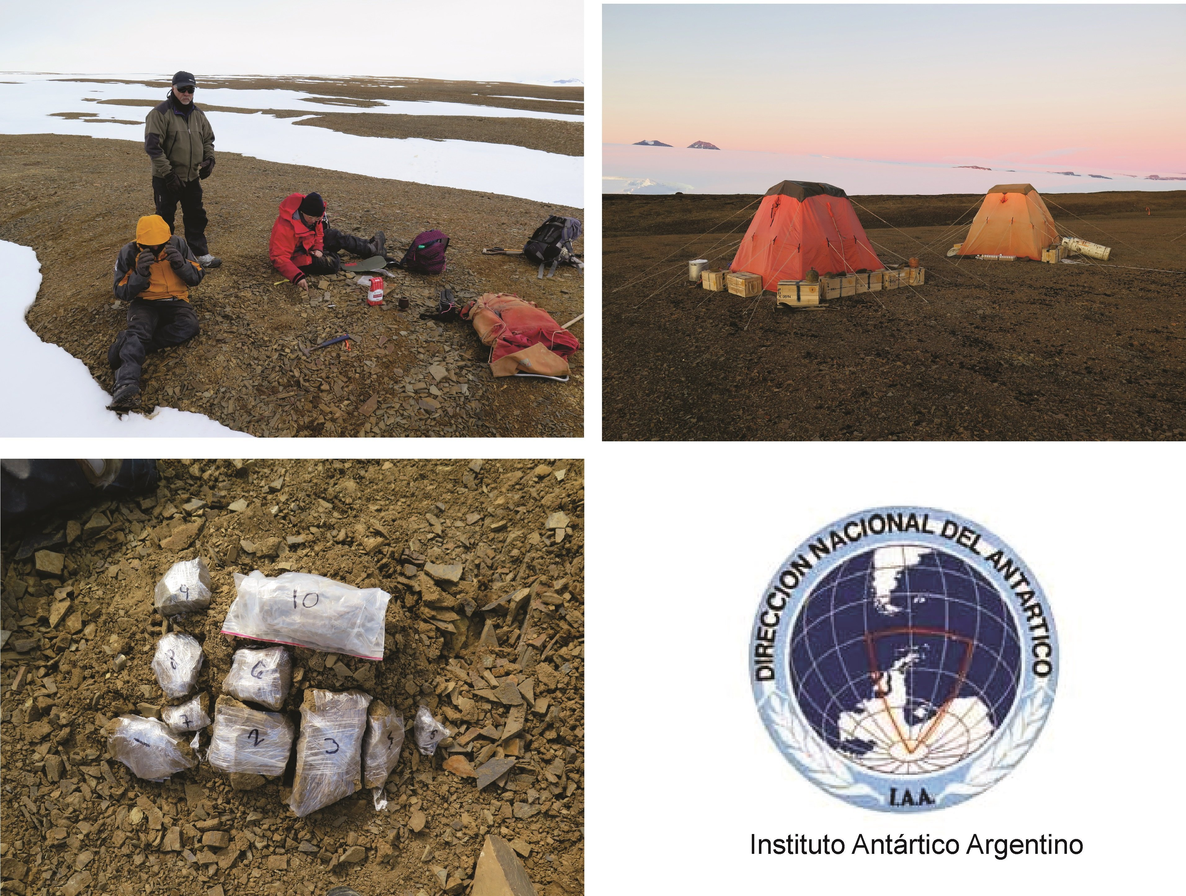 Imágenes de la expedición que encontró los restos de un plesiosaurio de alrededor de 150 millones de años en la península Antártica
