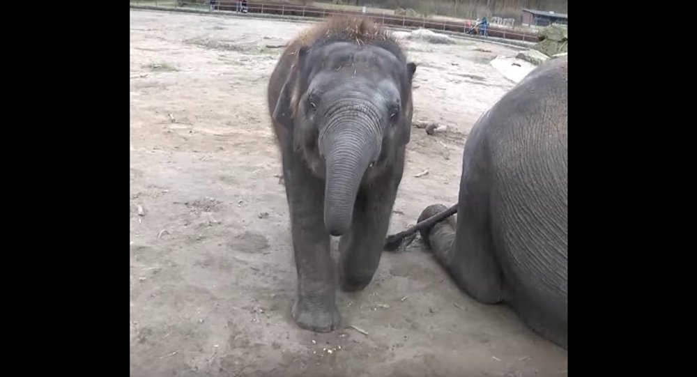 The Elephant Edgar Celebrated His Birthday at the Berlin Zoo