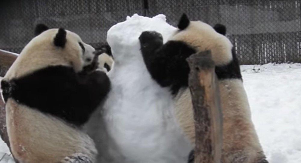 Thug Life Violent Canadian Pandas Versus Snowman Sputnik