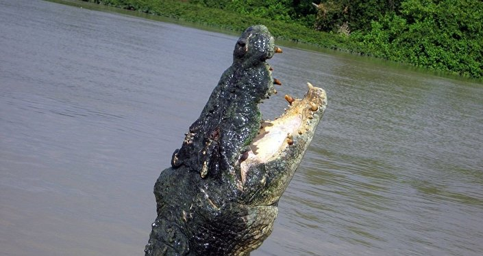 Dreadful Four-Metre Crocodile Killed in Australia After Remains of Missing Fisherman Discovered