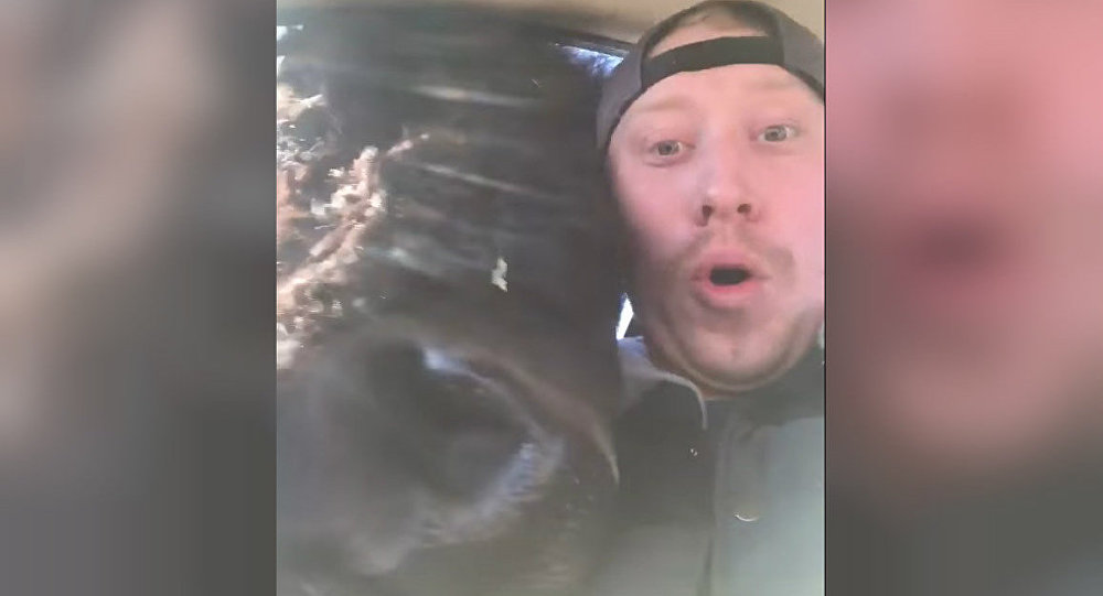 My friend sent me this video of a bison in his car with no context