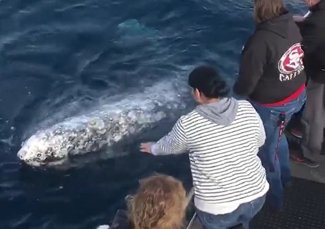 Playful whale gets up close and personal, 'showering' these boaters with a spray of water