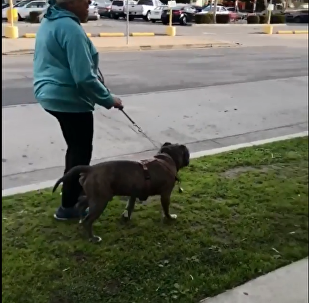 California woman goes on racist rant after man tells her to clean up after dog