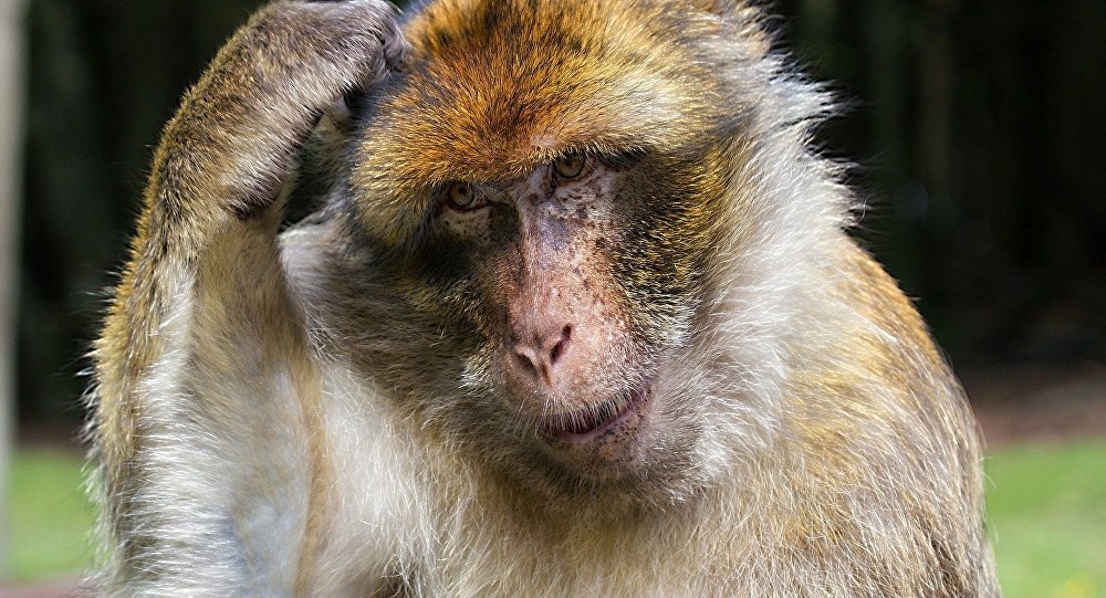 Monkeys Stone Man To Death In India