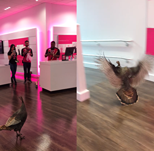 Early Bird Deal? Turkey Trots into T-Mobile