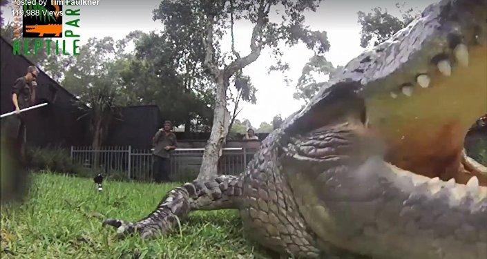 Croc steals GoPro!