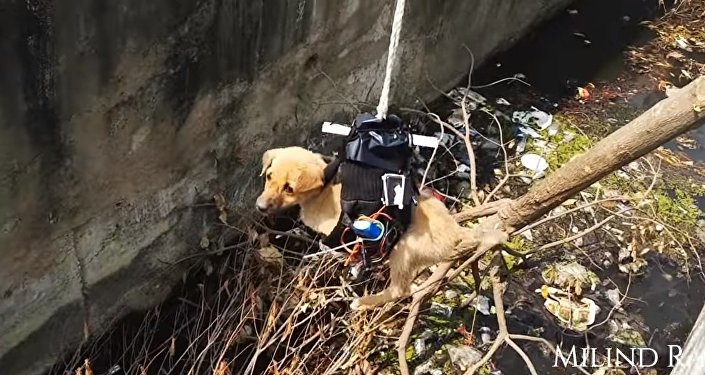 Puppy Rescue You Have Never Seen Before