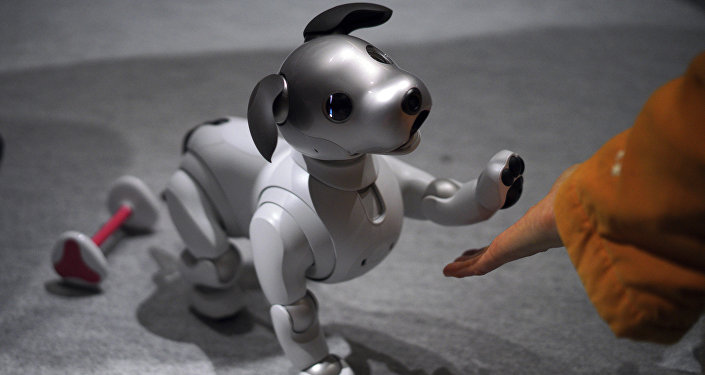 A guest plays with Sony Corp.'s new Aibo robot dog at its showroom in Tokyo (File)