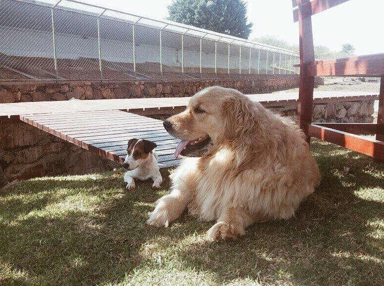 Marcela Temer's dogs