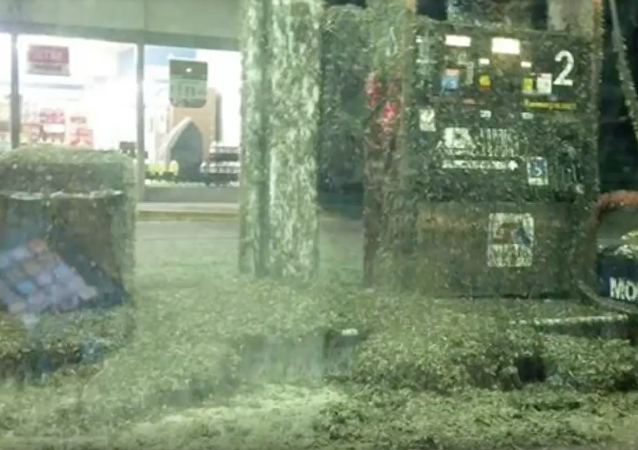 Refuel or Repent? Mayfly Swarm Masks Louisiana Gas Station
