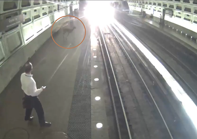 What the Buck? Deer Wanders Into Washington, DC, Area Metro Station