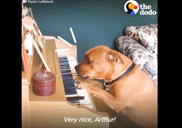 Piano Pooch: Musical Pup Paws the Ivories for Owner