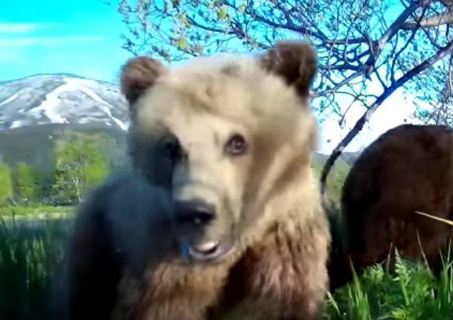 Медвежонок делает селфи