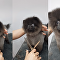 Groom 'n Groove: Puppy Dances During Haircut