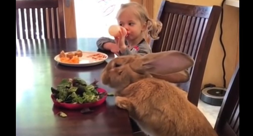 Little Girl and Giant Bunny Have a Meal Together