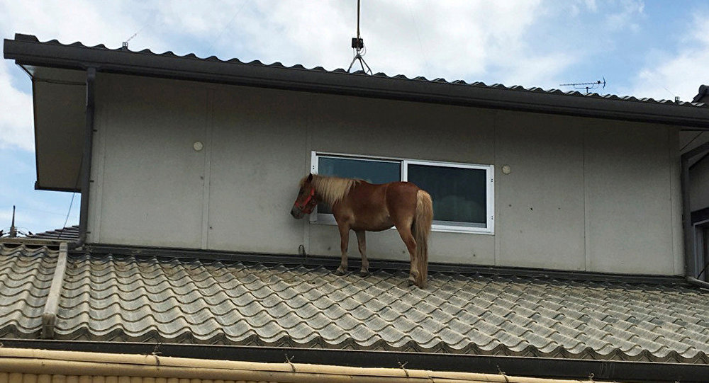 A horse stranded on a rooftop after torrential rain, is pictured in Kurashiki, Okayama Prefecture, Japan July 9, 2018