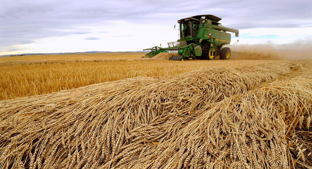 Tara Giles operates a combine as she harvests wheat on a 160-acre field located south of High River, Alberta, September 28, 2013
