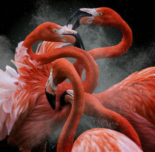 Avian Grace: Highlights of the Bird Photographer of the Year 2018 Contest