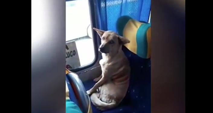 Dog Taking a Bus. 2018