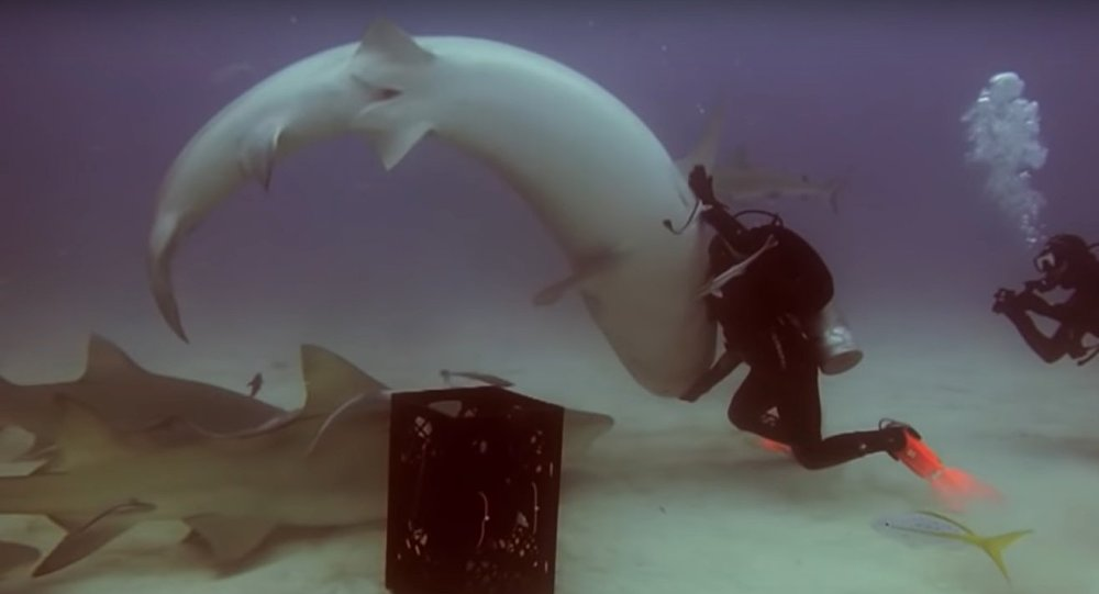 Incredible Moment Diver Hypnotises Shark