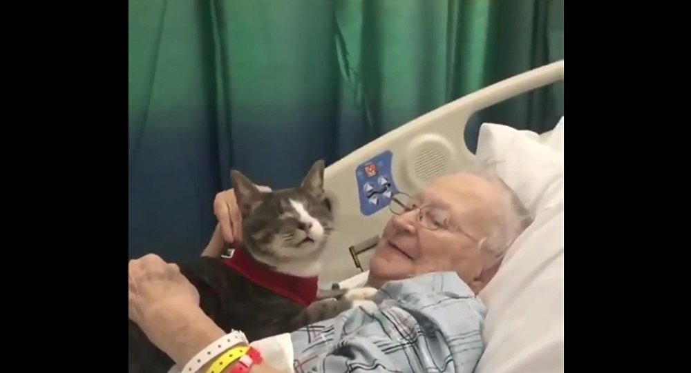 Blind cat keeps his beloved human company during her hospital stay