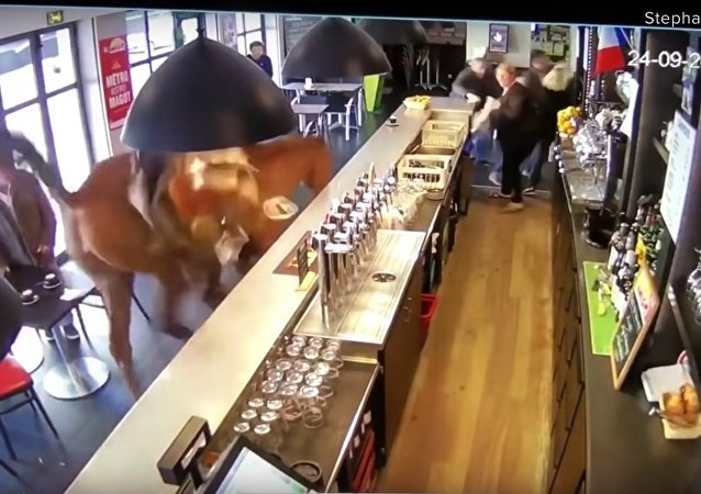 Horse runs into French sports bar, sends patrons running