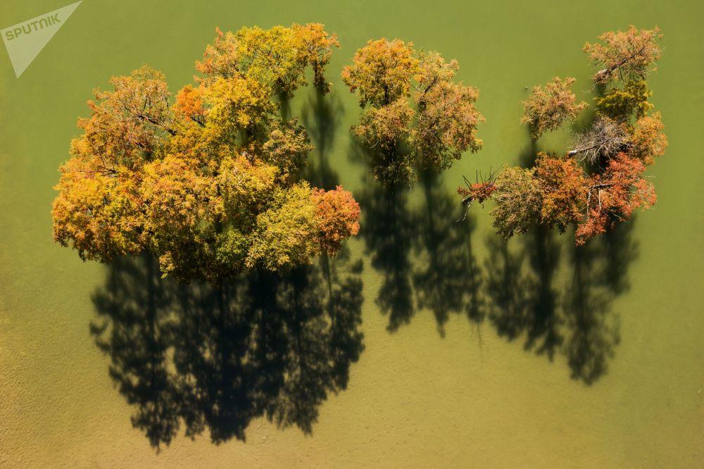 Bald Cypresses in Russian Krasnodar Krai